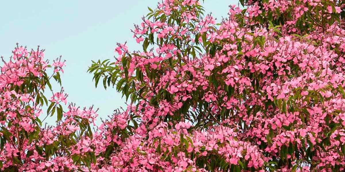 El Puntaeguayabo, una joya vegetal del paisaje tropical