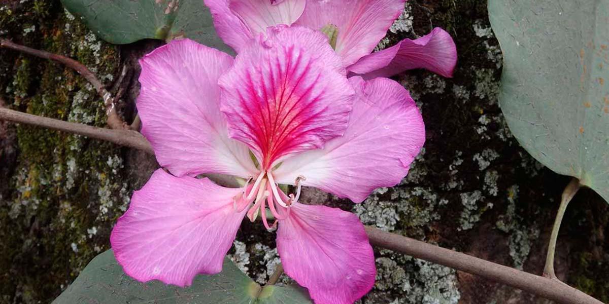 Árbol orquídea