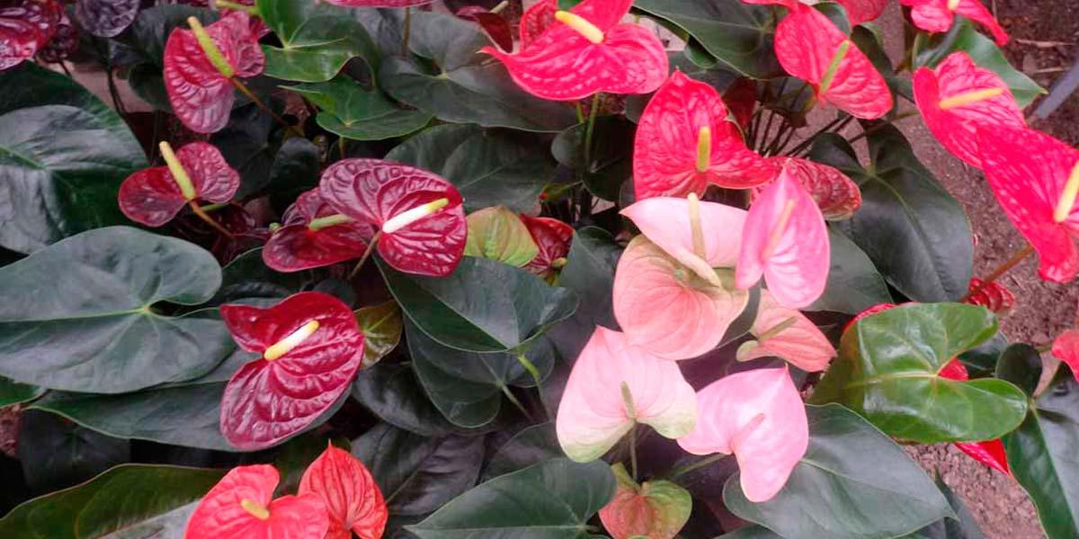 Colores para el jardín. Guía de plantas ornamentales
