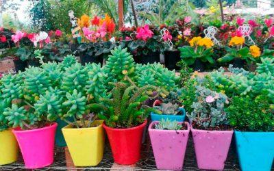 Novedosos y llamativos recipientes para jardinería