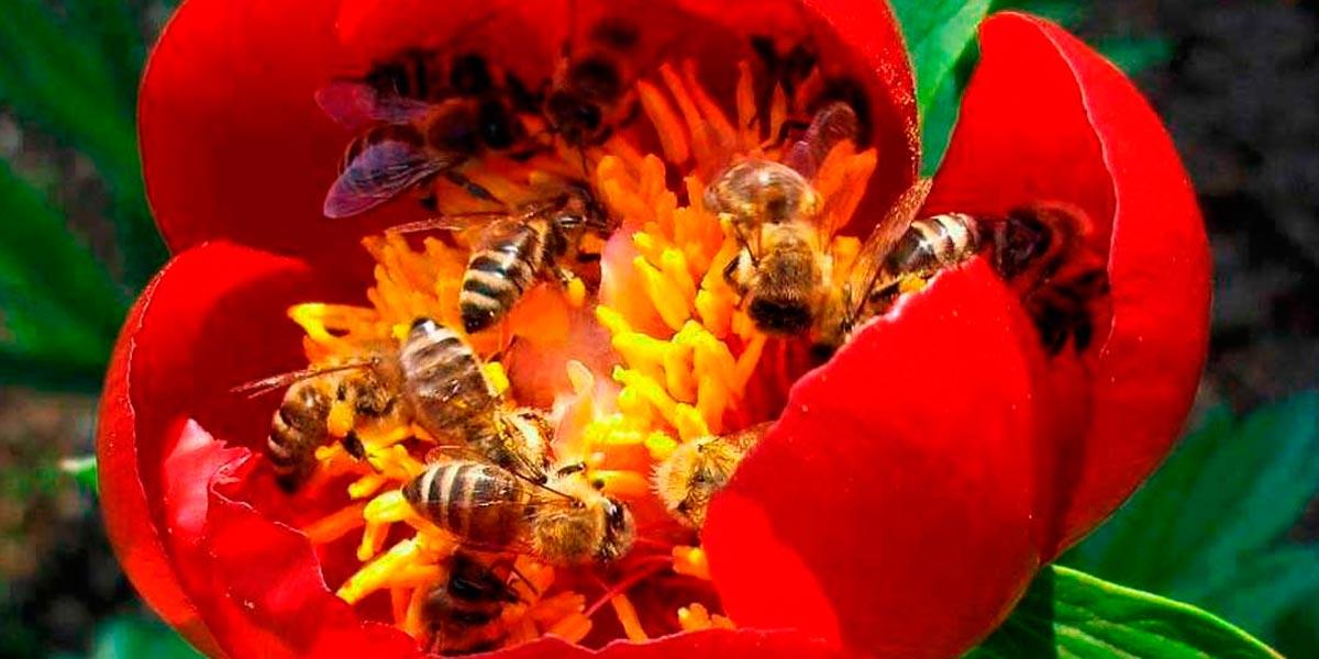 Las abejas consideradas los seres más importantes del planeta
