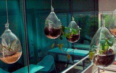 «LaSavia», un colectivo ambiental que crea innovadores proyectos