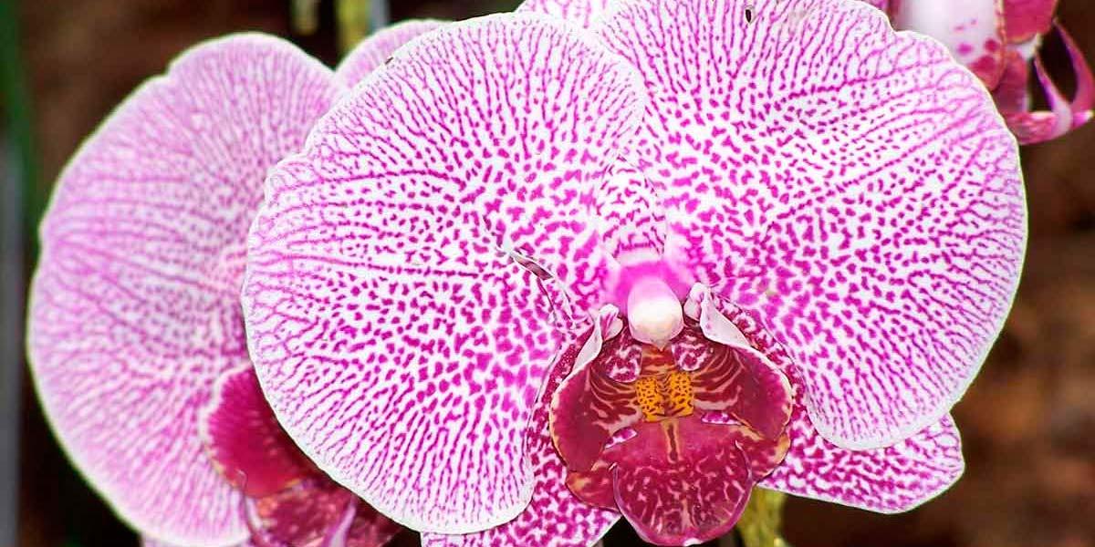 7 Consideraciones para el cultivo de orquídeas